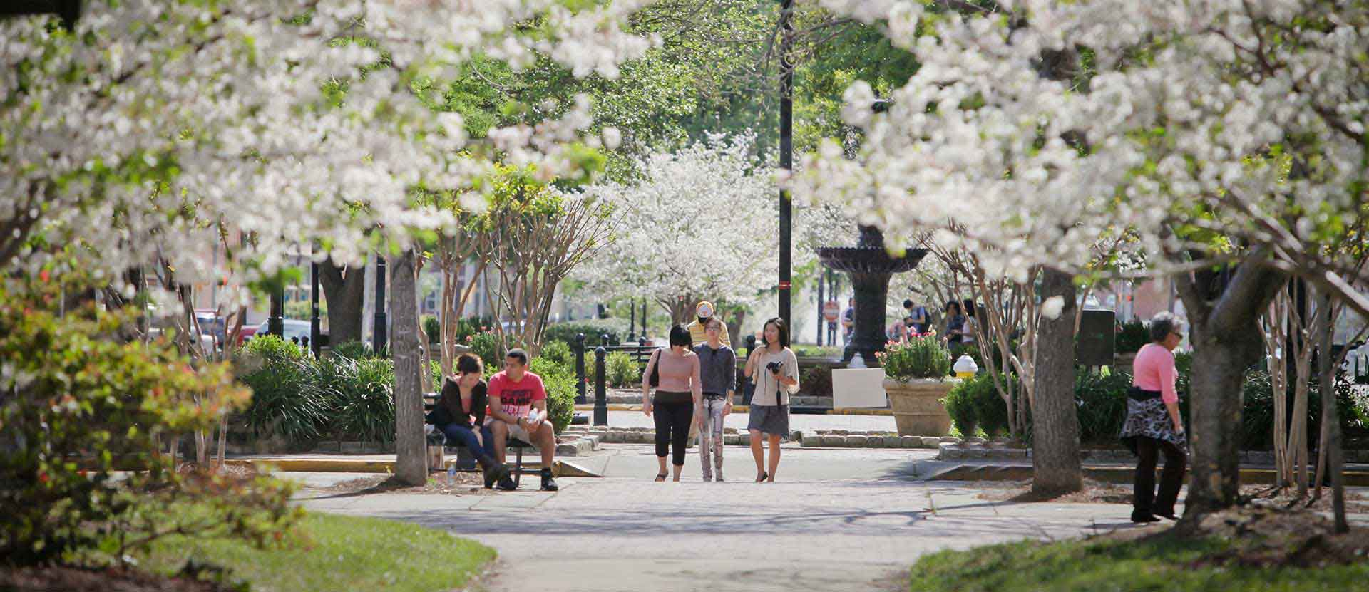 Downtown macon with the Cherry Trees blooming pink flowers and crowds walk by.